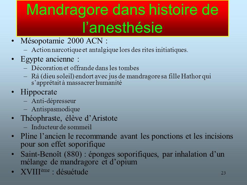 23 Mandragore dans histoire de lanesthésie Mésopotamie 2000 ACN : –Action narcotique et antalgique lors des rites initiatiques.