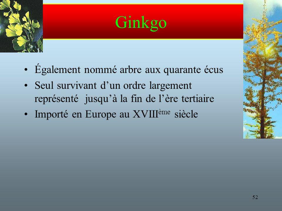 52 Ginkgo Également nommé arbre aux quarante écus Seul survivant dun ordre largement représenté jusquà la fin de lère tertiaire Importé en Europe au XVIII ème siècle