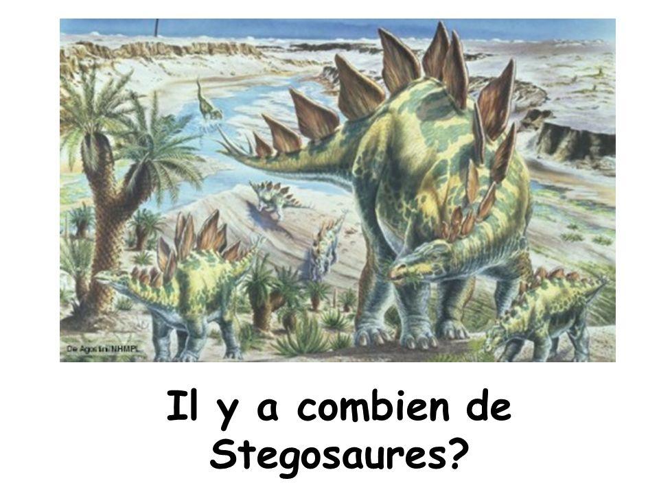 Il y a combien de Stegosaures?