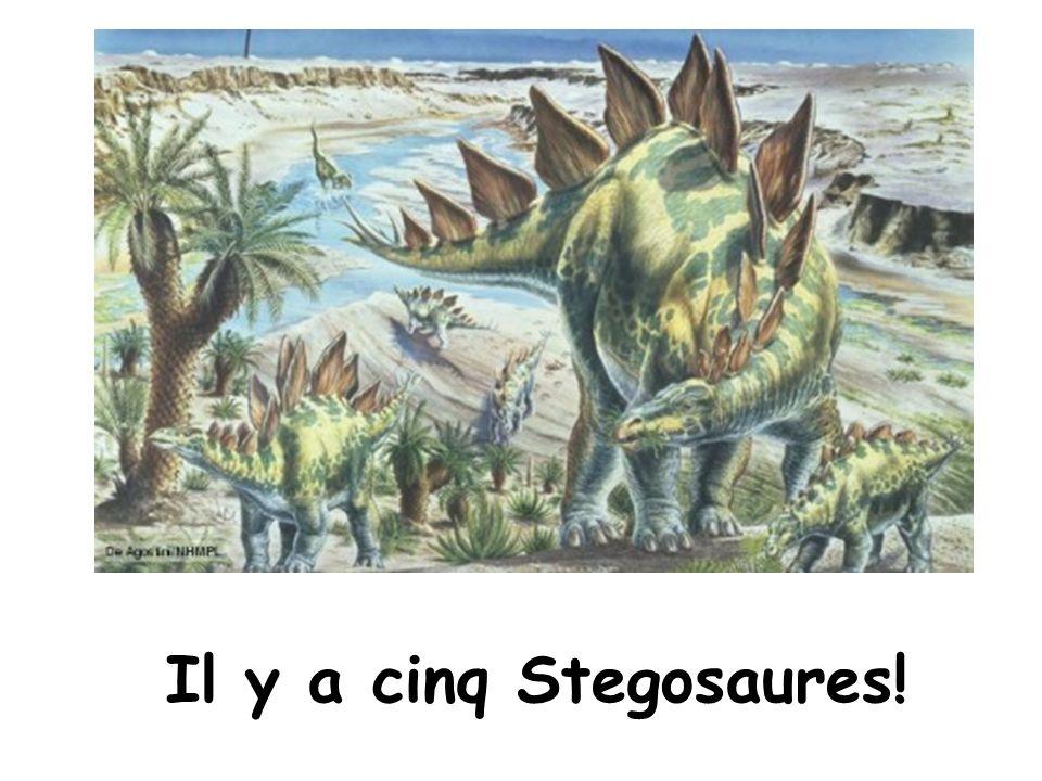 Il y a cinq Stegosaures!