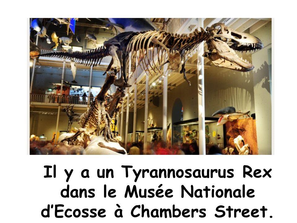 Il y a un Tyrannosaurus Rex dans le Musée Nationale dEcosse à Chambers Street.