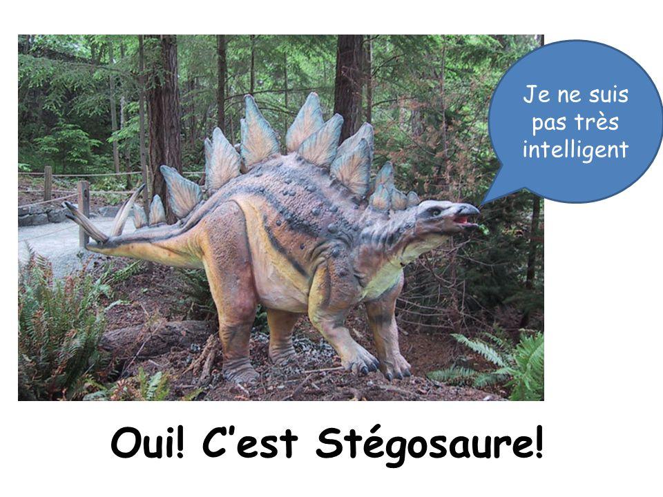 Oui! Cest Stégosaure! Je ne suis pas très intelligent