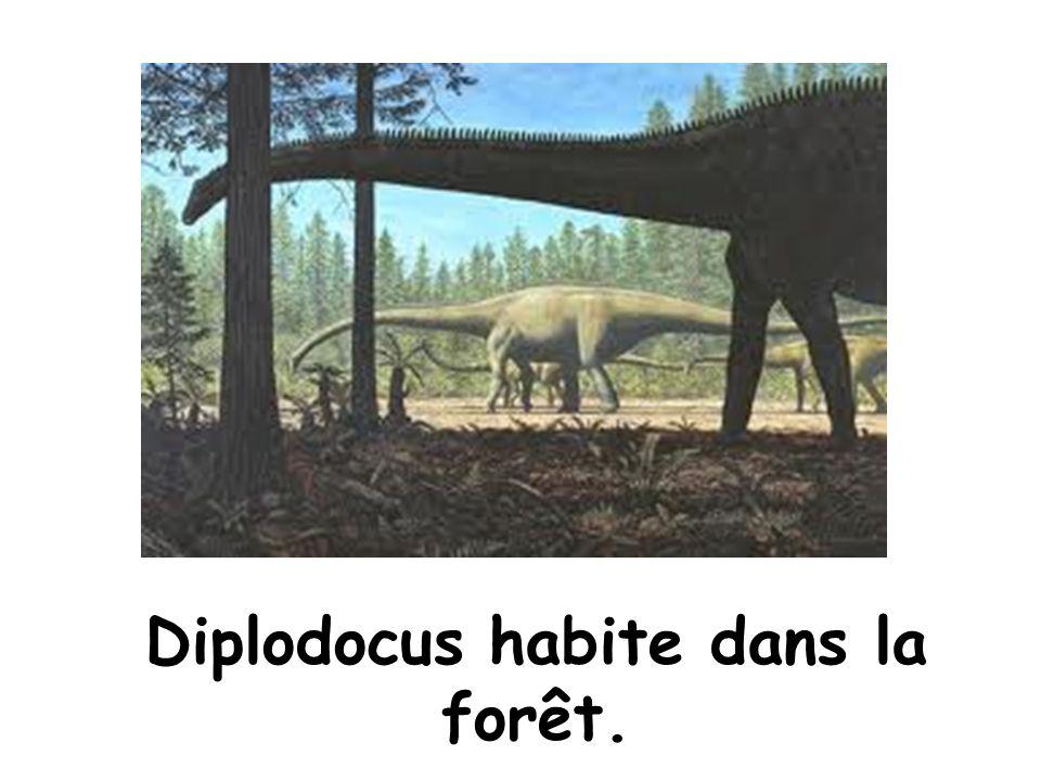 Diplodocus aime les plantes! Bon appétit Diplodocus!