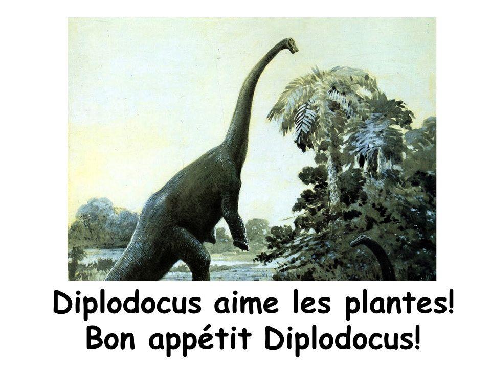 Quiz! 5. Quel dinosaure a un petit cerveau?