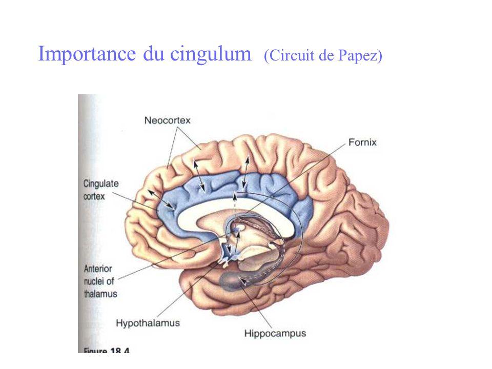 Importance du cingulum (Circuit de Papez)
