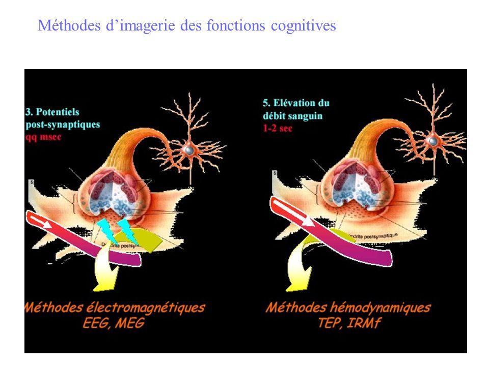 Méthodes dimagerie des fonctions cognitives