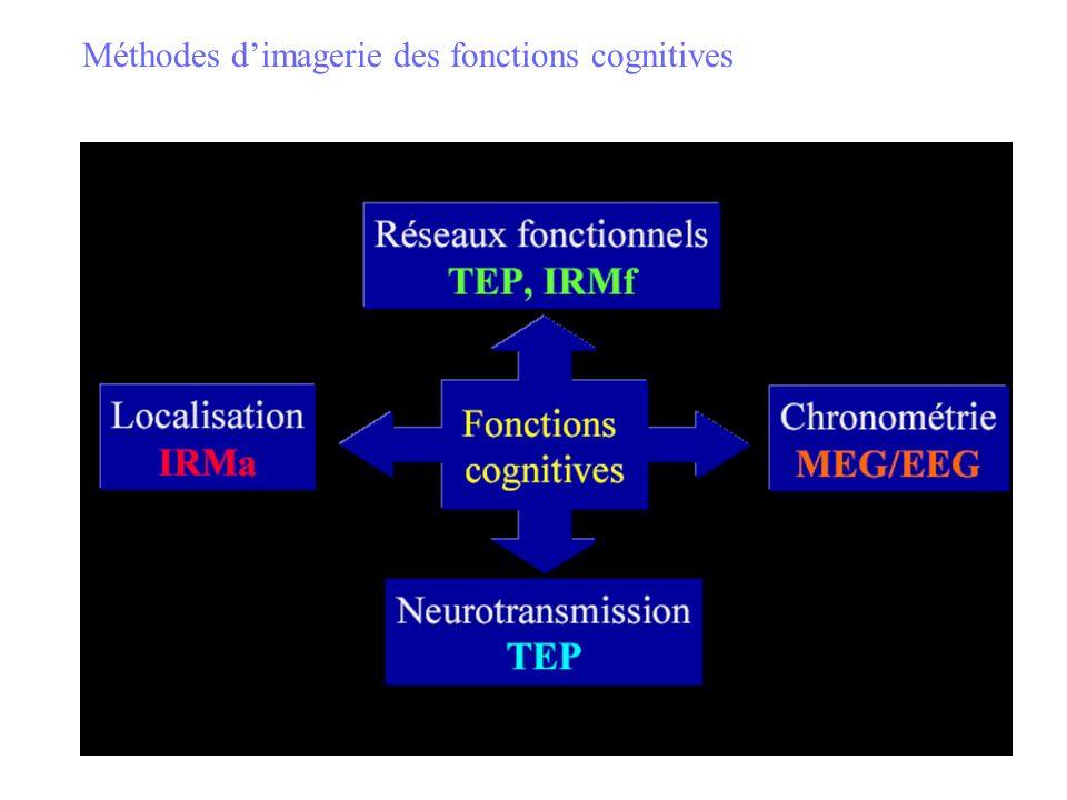 Imager le cerveau en fonctionnement Identifier les régions du cerveau dont la mise en jeu est associée à la réalisation dune tâche cognitive donnée Notion de localisation cérébrale : - une fonction = une région .