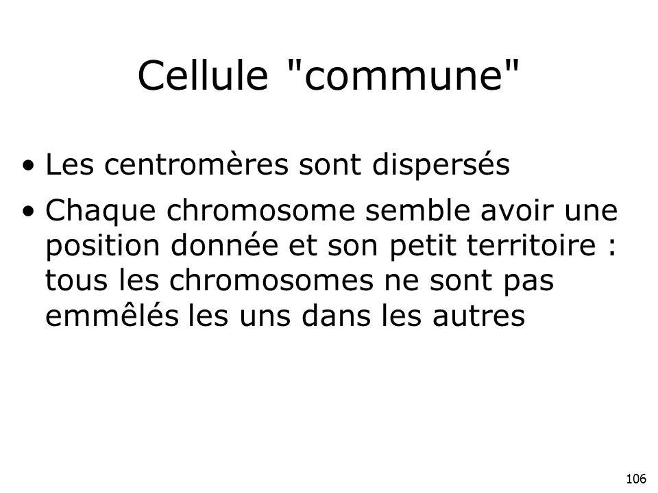 106 Cellule