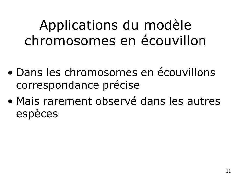 11 Applications du modèle chromosomes en écouvillon Dans les chromosomes en écouvillons correspondance précise Mais rarement observé dans les autres e