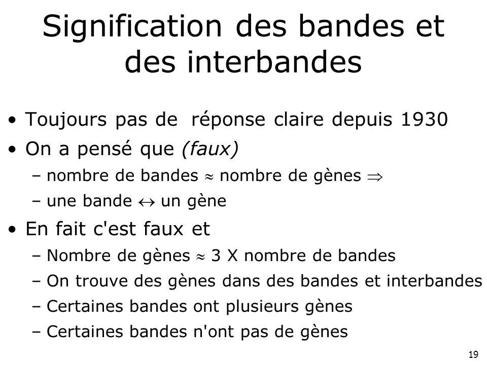 19 Signification des bandes et des interbandes Toujours pas de réponse claire depuis 1930 On a pensé que (faux) –nombre de bandes nombre de gènes –une