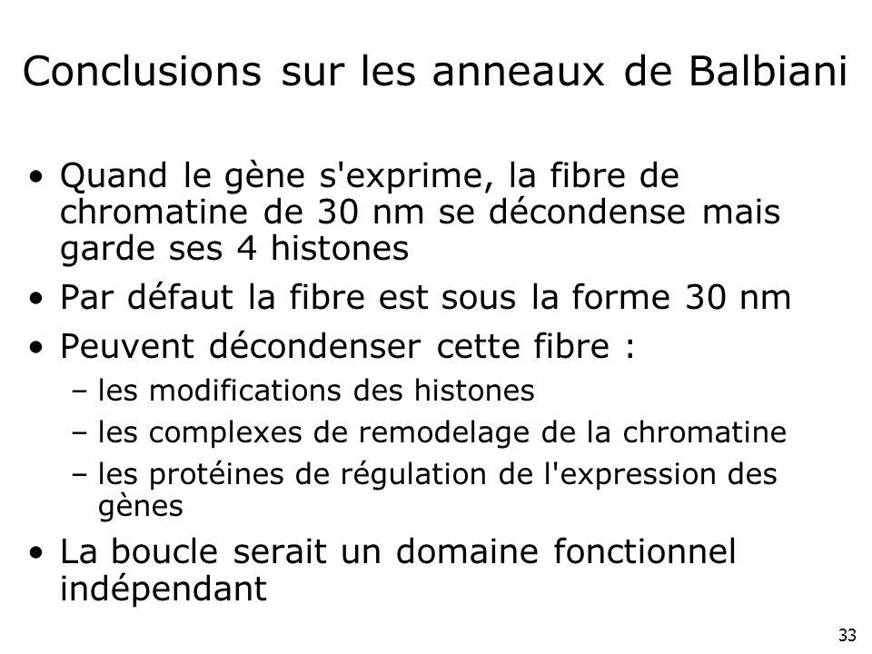 33 Conclusions sur les anneaux de Balbiani Quand le gène s'exprime, la fibre de chromatine de 30 nm se décondense mais garde ses 4 histones Par défaut