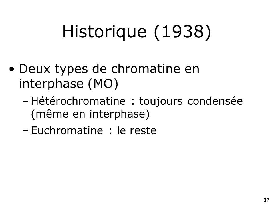 37 Historique (1938) Deux types de chromatine en interphase (MO) –Hétérochromatine : toujours condensée (même en interphase) –Euchromatine : le reste