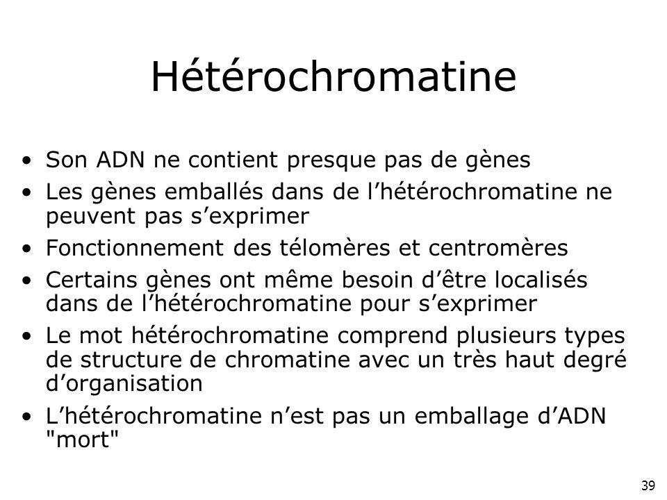 39 Hétérochromatine Son ADN ne contient presque pas de gènes Les gènes emballés dans de lhétérochromatine ne peuvent pas sexprimer Fonctionnement des