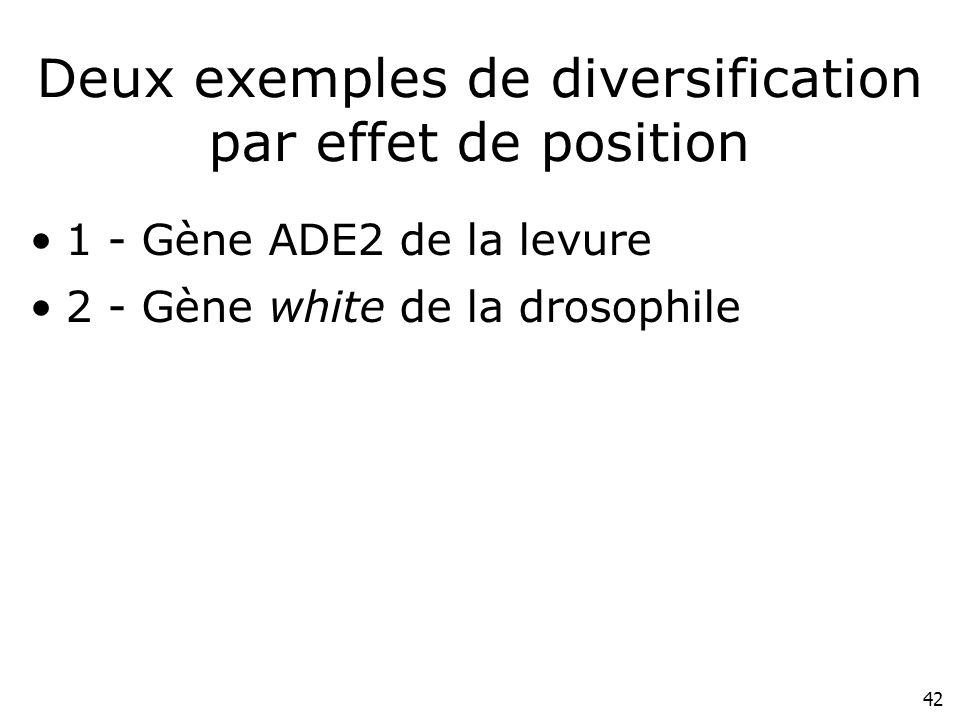 42 Deux exemples de diversification par effet de position 1 - Gène ADE2 de la levure 2 - Gène white de la drosophile