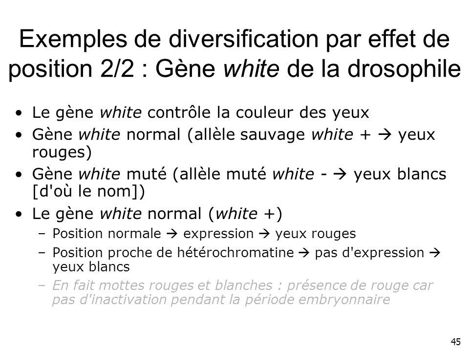 45 Exemples de diversification par effet de position 2/2 : Gène white de la drosophile Le gène white contrôle la couleur des yeux Gène white normal (a