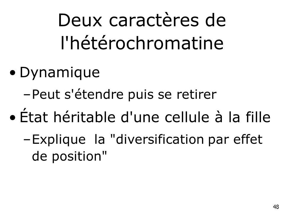 48 Deux caractères de l'hétérochromatine Dynamique –Peut s'étendre puis se retirer État héritable d'une cellule à la fille –Explique la