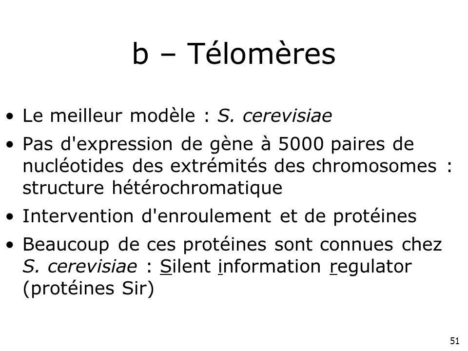 51 b – Télomères Le meilleur modèle : S. cerevisiae Pas d'expression de gène à 5000 paires de nucléotides des extrémités des chromosomes : structure h