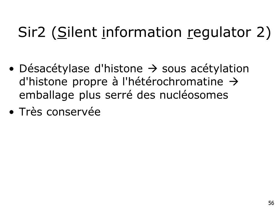 56 Sir2 (Silent information regulator 2) Désacétylase d'histone sous acétylation d'histone propre à l'hétérochromatine emballage plus serré des nucléo