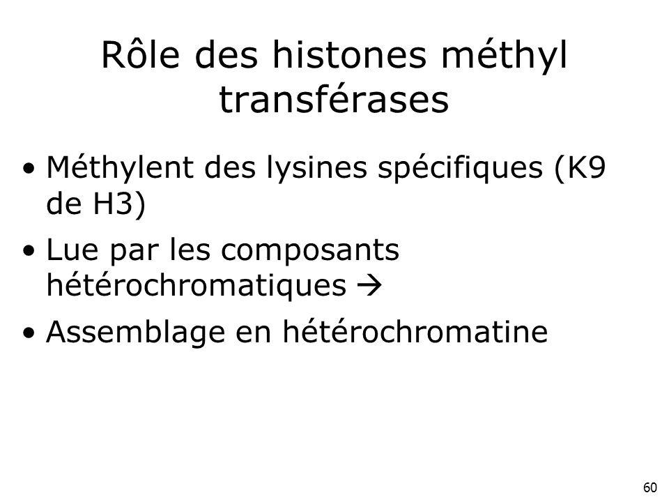 60 Rôle des histones méthyl transférases Méthylent des lysines spécifiques (K9 de H3) Lue par les composants hétérochromatiques Assemblage en hétéroch