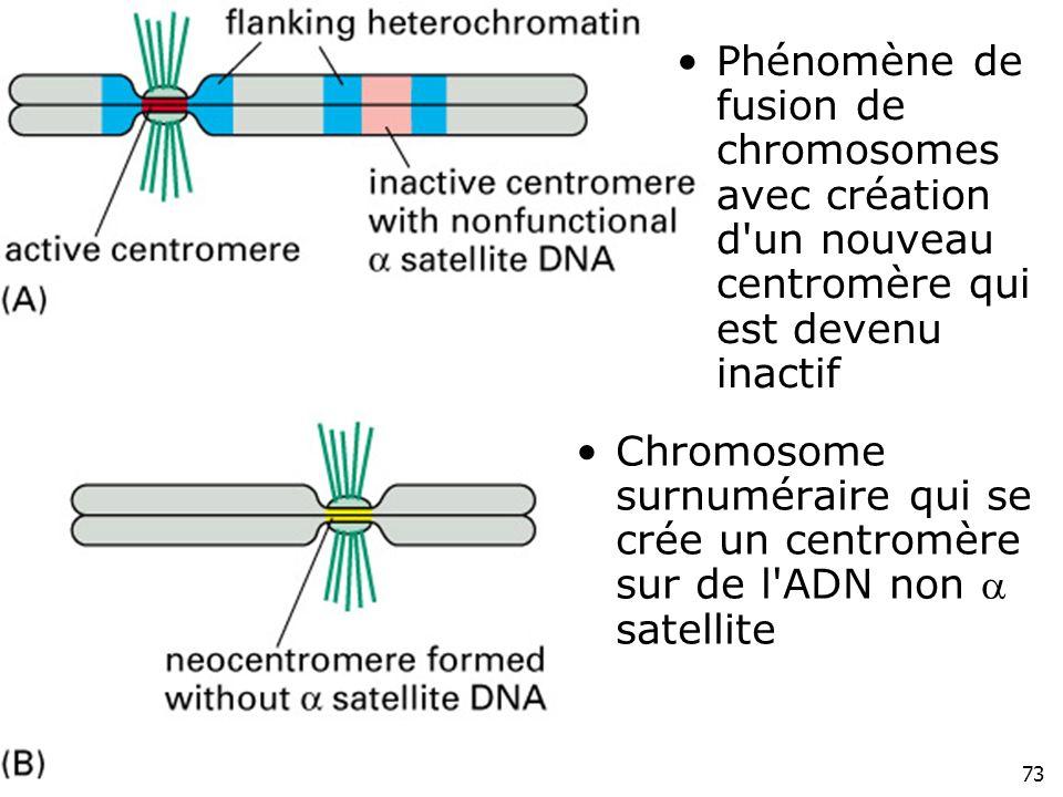 73 Fig 4-51(AB) Phénomène de fusion de chromosomes avec création d'un nouveau centromère qui est devenu inactif Chromosome surnuméraire qui se crée un