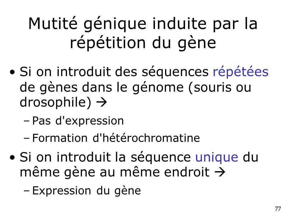 77 Mutité génique induite par la répétition du gène Si on introduit des séquences répétées de gènes dans le génome (souris ou drosophile) –Pas d'expre