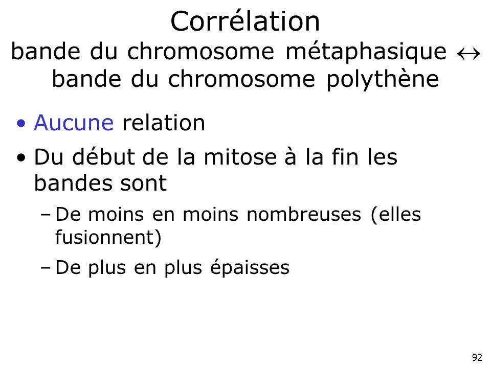 92 Corrélation bande du chromosome métaphasique bande du chromosome polythène Aucune relation Du début de la mitose à la fin les bandes sont –De moins