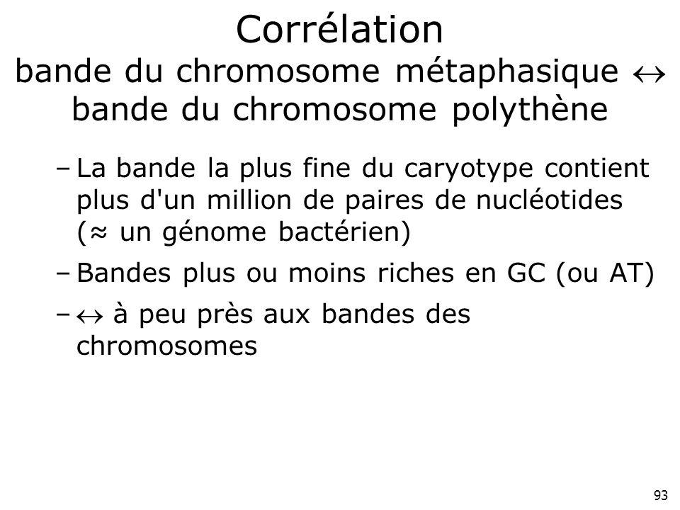 93 Corrélation bande du chromosome métaphasique bande du chromosome polythène –La bande la plus fine du caryotype contient plus d'un million de paires