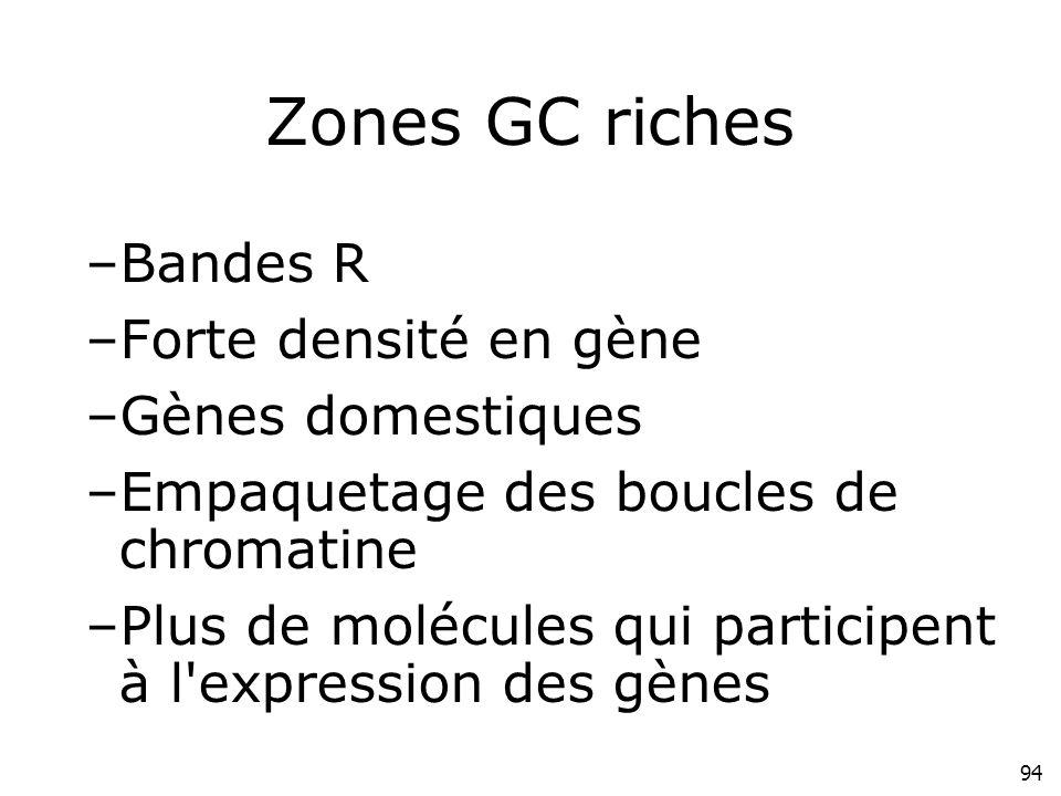 94 Zones GC riches –Bandes R –Forte densité en gène –Gènes domestiques –Empaquetage des boucles de chromatine –Plus de molécules qui participent à l'e