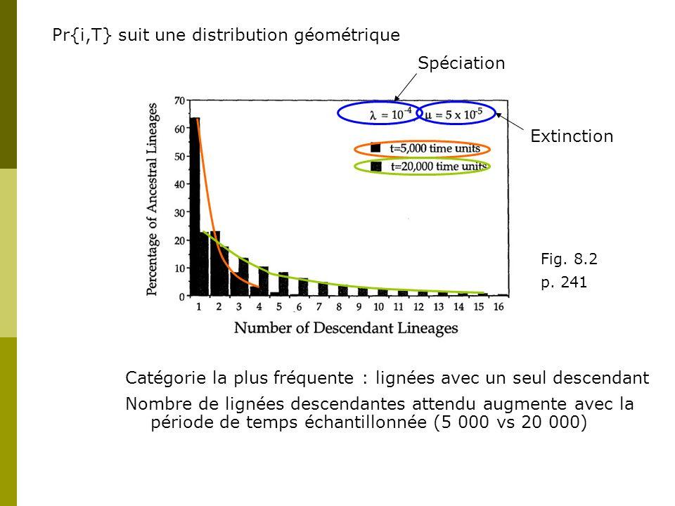 Pr{i,T} suit une distribution géométrique Catégorie la plus fréquente : lignées avec un seul descendant Nombre de lignées descendantes attendu augmente avec la période de temps échantillonnée (5 000 vs 20 000) Spéciation Extinction Fig.