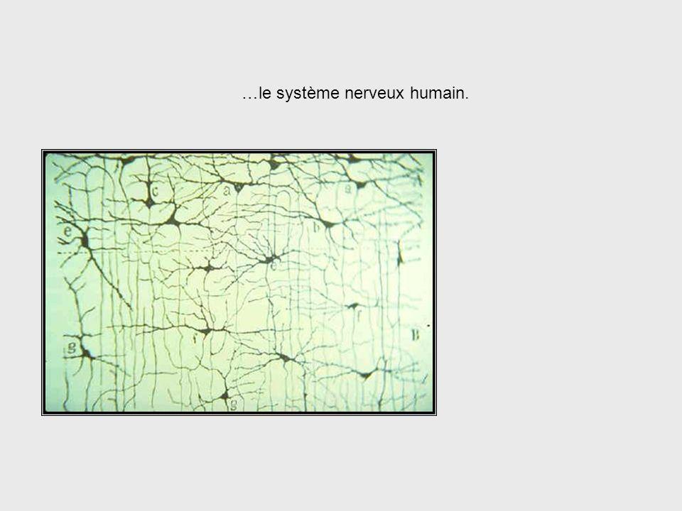 Neurophysiologie + Mathématiques + Philosophie Warren McCulloch était un personnage clé en ce qui concerne lélargissement des vues de la cybernétique.