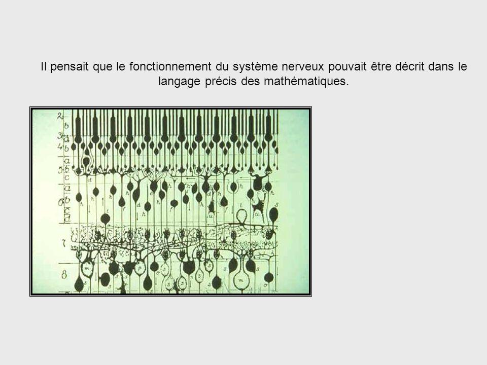 …le système nerveux humain. The Human Nervous System