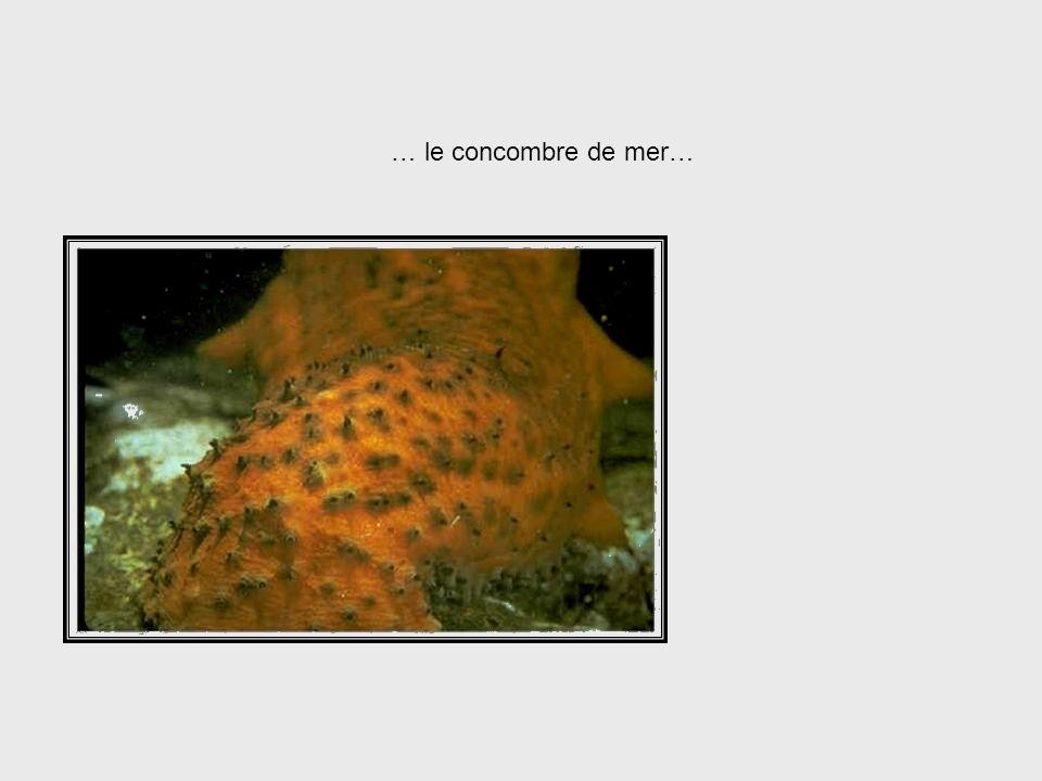 Au contraire, certains animaux tels que létoile de mer,… Starfish System