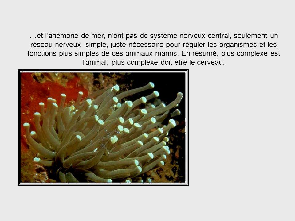… le concombre de mer… Sea Cucumber System
