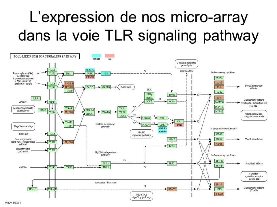 Lexpression de nos micro-array dans la voie TLR signaling pathway