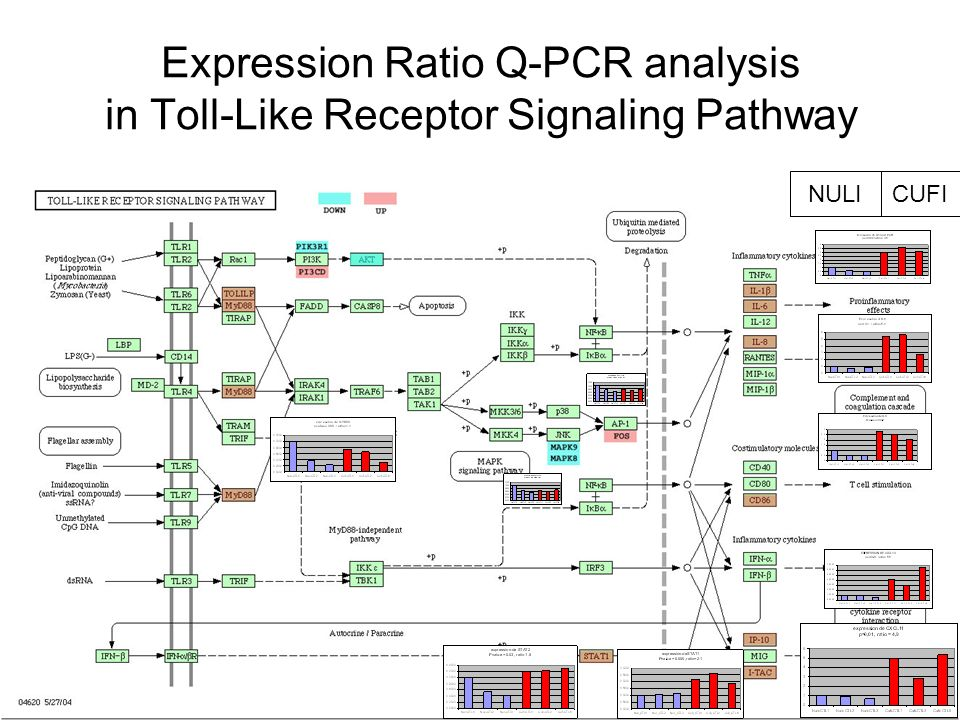 Expression Ratio Q-PCR analysis in Toll-Like Receptor Signaling Pathway CUFINULI