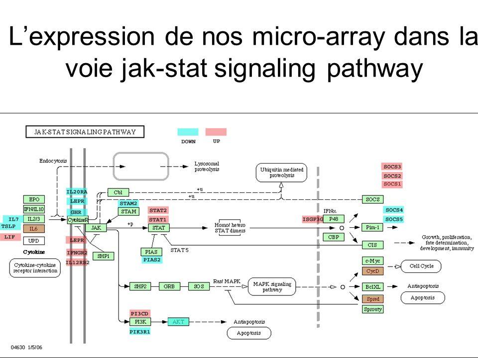 Lexpression de nos micro-array dans la voie jak-stat signaling pathway