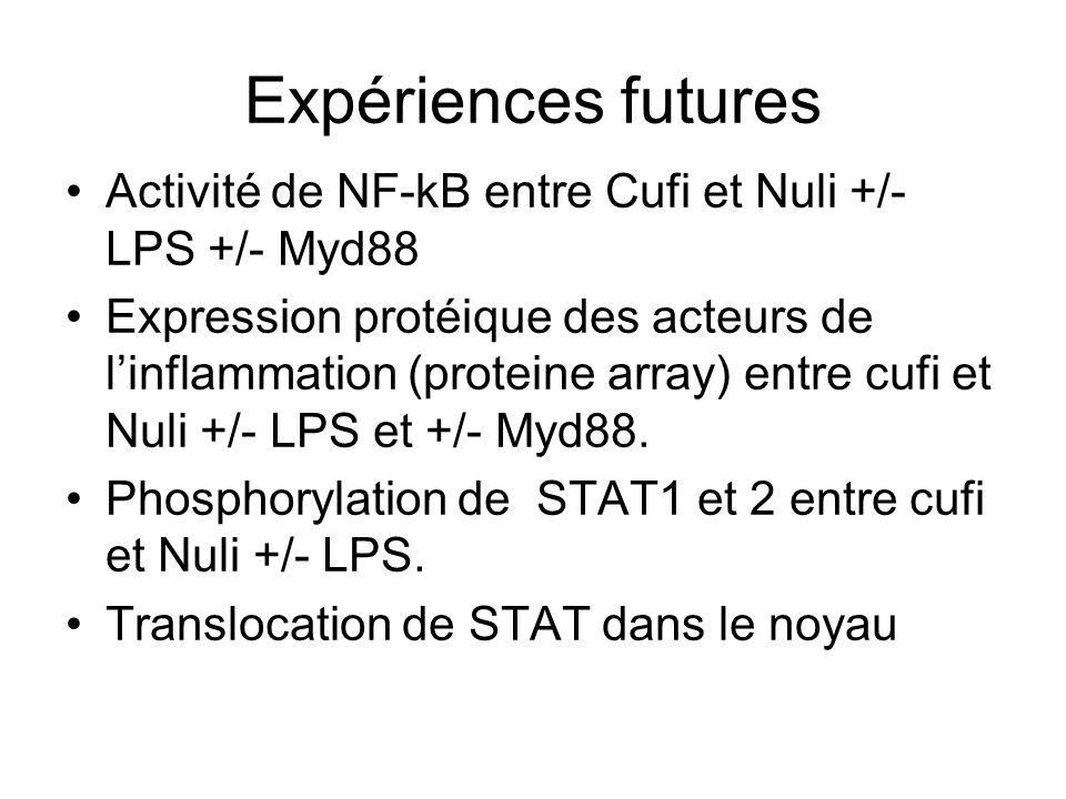 Expériences futures Activité de NF-kB entre Cufi et Nuli +/- LPS +/- Myd88 Expression protéique des acteurs de linflammation (proteine array) entre cufi et Nuli +/- LPS et +/- Myd88.
