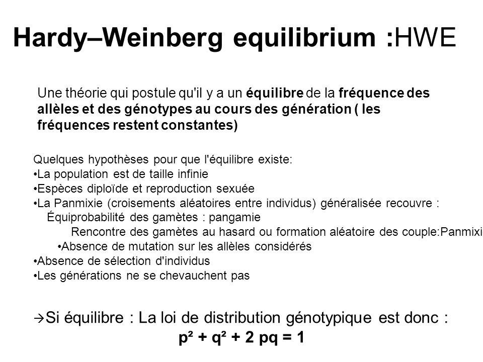 Hardy–Weinberg equilibrium :HWE Une théorie qui postule qu'il y a un équilibre de la fréquence des allèles et des génotypes au cours des génération (