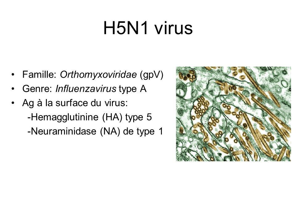 H5N1 virus Famille: Orthomyxoviridae (gpV) Genre: Influenzavirus type A Ag à la surface du virus: -Hemagglutinine (HA) type 5 -Neuraminidase (NA) de t