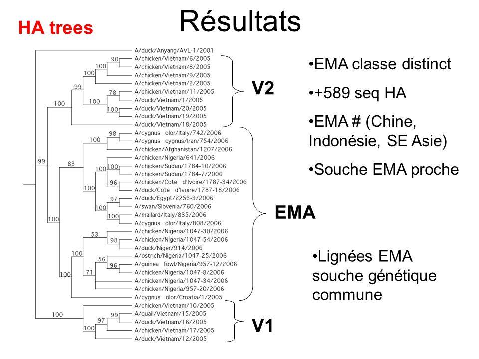 Résultats V1 V2 EMA HA trees EMA classe distinct +589 seq HA EMA # (Chine, Indonésie, SE Asie) Souche EMA proche Lignées EMA souche génétique commune