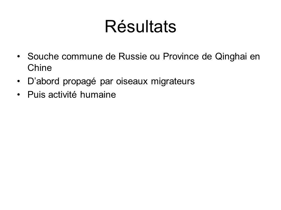 Résultats Souche commune de Russie ou Province de Qinghai en Chine Dabord propagé par oiseaux migrateurs Puis activité humaine
