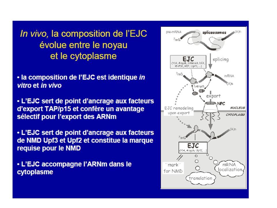 LEJC (exon-exon junction complex) est un complexe protéique de 335kDa déposé en amont des jonctions exon-exon lors de lépissage du pré-ARNm.