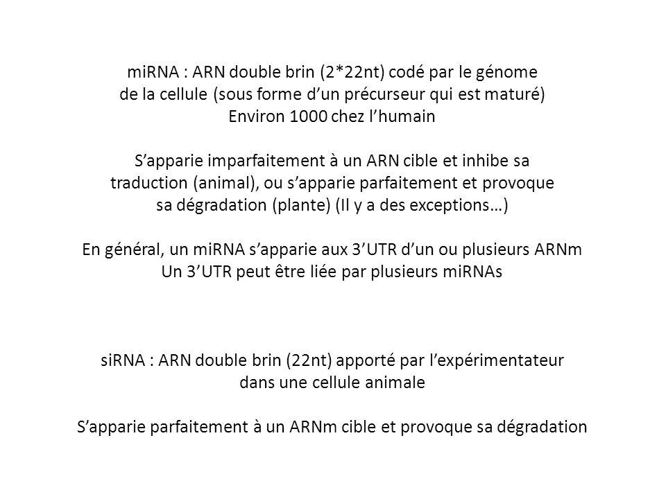 miRNA : ARN double brin (2*22nt) codé par le génome de la cellule (sous forme dun précurseur qui est maturé) Environ 1000 chez lhumain Sapparie imparf
