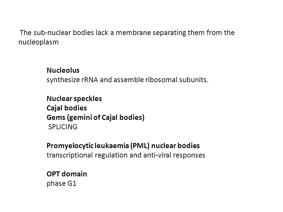 The sub-nuclear bodies lack a membrane separating them from the nucleoplasm Nucleolus synthesize rRNA and assemble ribosomal subunits.
