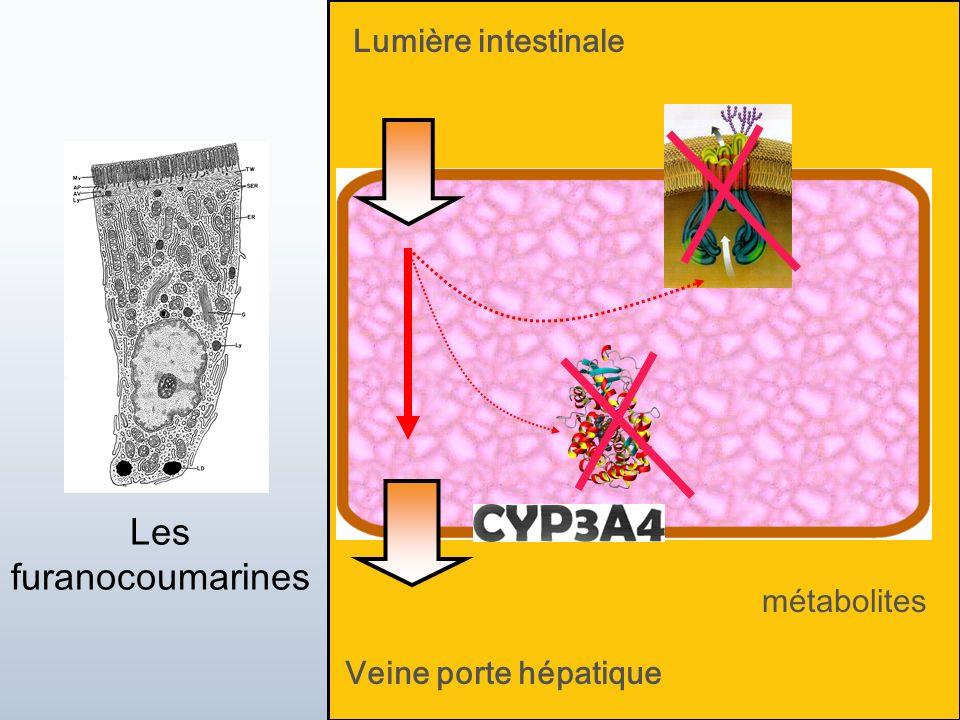 Jean-Louis Brazier 2 juin 2010 17 Veine porte hépatique Lumière intestinale métabolites Les furanocoumarines