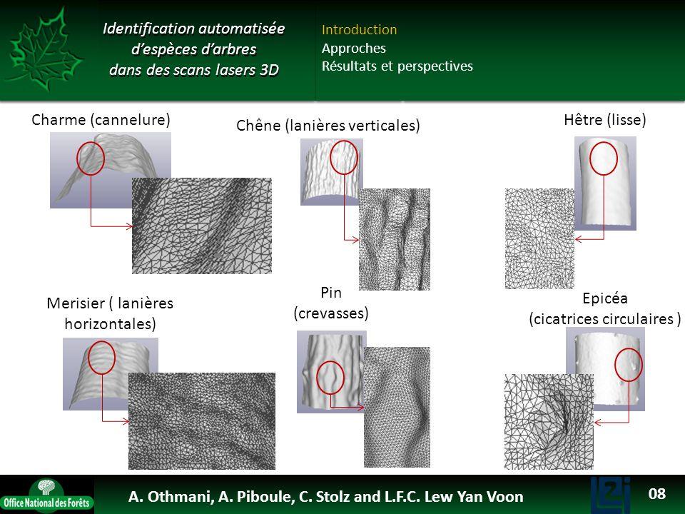 OTHMANI Ahlem 2013 Identification automatisée despèces darbres dans des scans lasers 3D Introduction Approches Résultats et perspectives Charme (canne