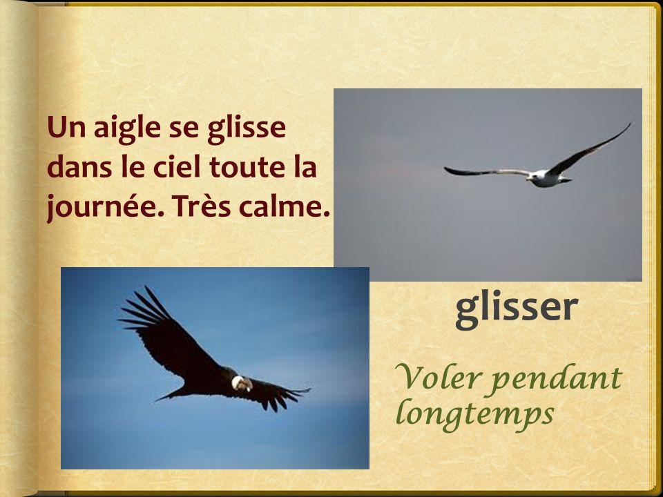 glisser Un aigle se glisse dans le ciel toute la journée. Très calme. Voler pendant longtemps