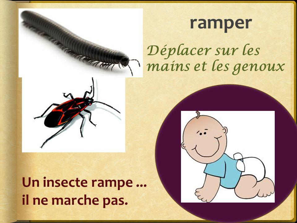 ramper Un insecte rampe... il ne marche pas. Déplacer sur les mains et les genoux