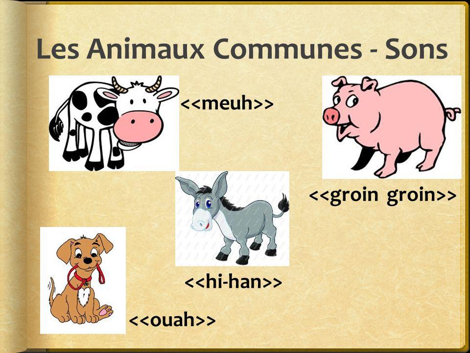 Les Animaux Communes - Sons >