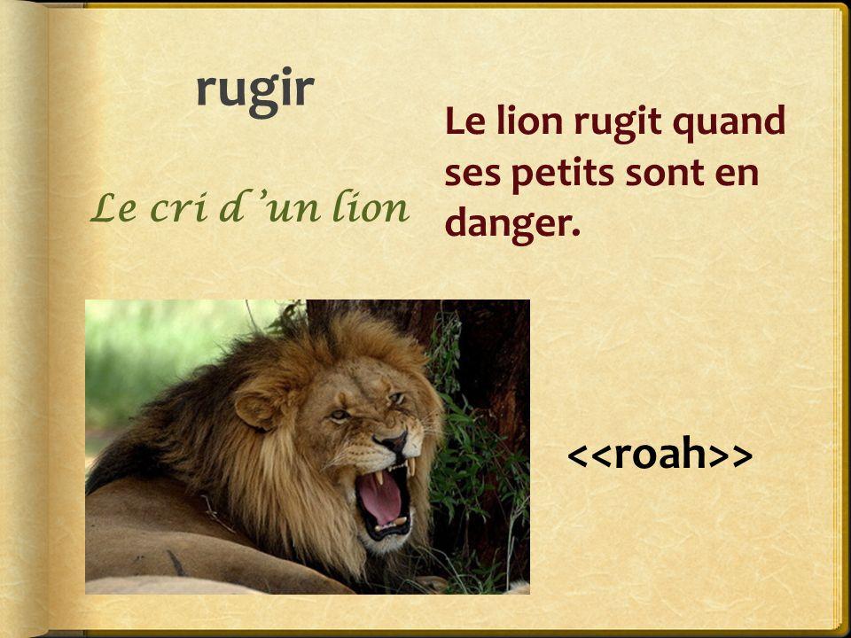 rugir > Le lion rugit quand ses petits sont en danger. Le cri d un lion
